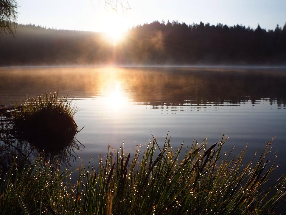 Dew Damp Dawn